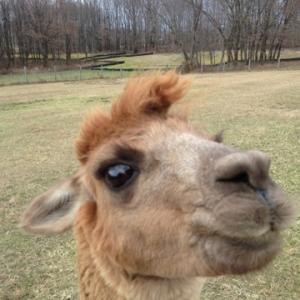 Bella Cora took a selfie for me.